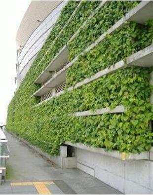 绿化率多少合适 住宅小区绿化率标准