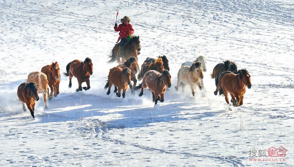 图:雪地里奔跑的马儿,美得像一幅画