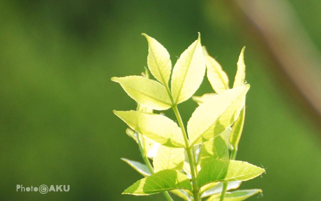美丽的小草(组图)