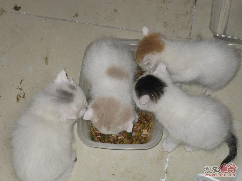 图:五只可爱小猫,等待爱猫人领养