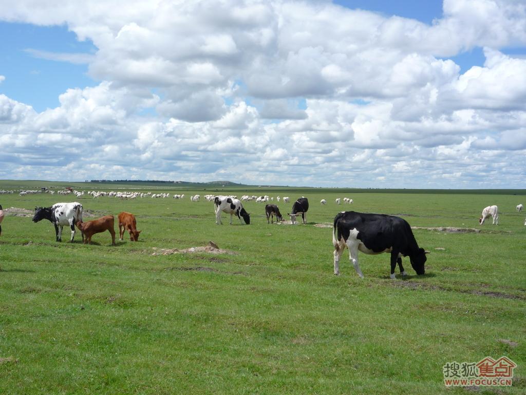 乳畜业和大牧场放牧业_大牧场放牧业ppt_牧场上的家课件ppt