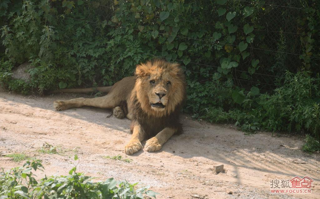 图:搜狐焦点自驾联盟:游八达岭野生动物园