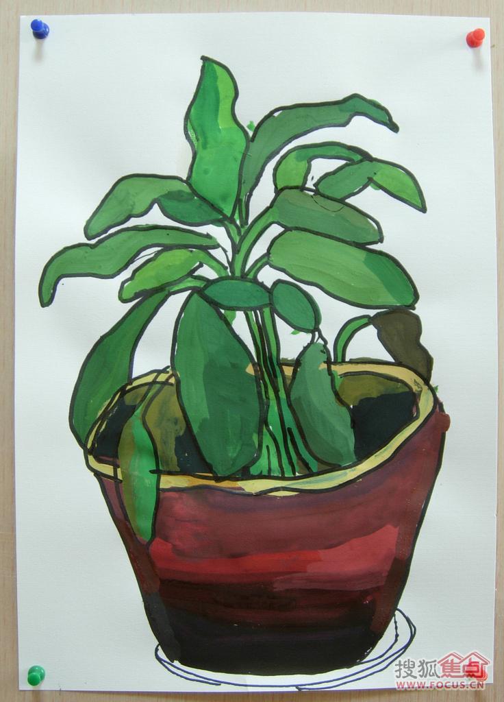 9岁小朋友画的水粉植物写生