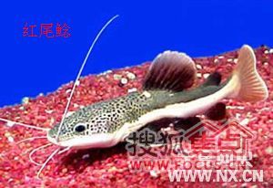 居养热带鱼喜欢招财猫这种的么 还 万科青青家园业主论坛图片