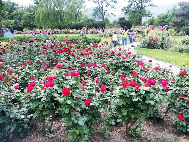 孩童节到植物园里拍花花
