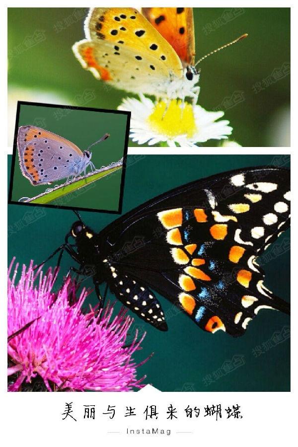 翅膀上的花纹也很神奇