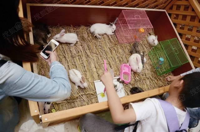 音乐和萌萌的动物,还有网鱼厅,种菜地……我先去看了萌chong,有小兔子