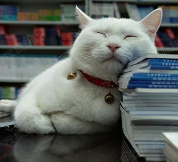 壁纸 动物 猫 猫咪 小猫 桌面 364_331