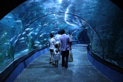 游欢乐海底世界感受海洋动物的魅力,再带孩子去儿童水上乐园攀岩与水