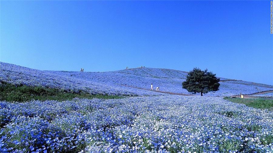 日本旅游地�_日本29处不容错过的旅游景点