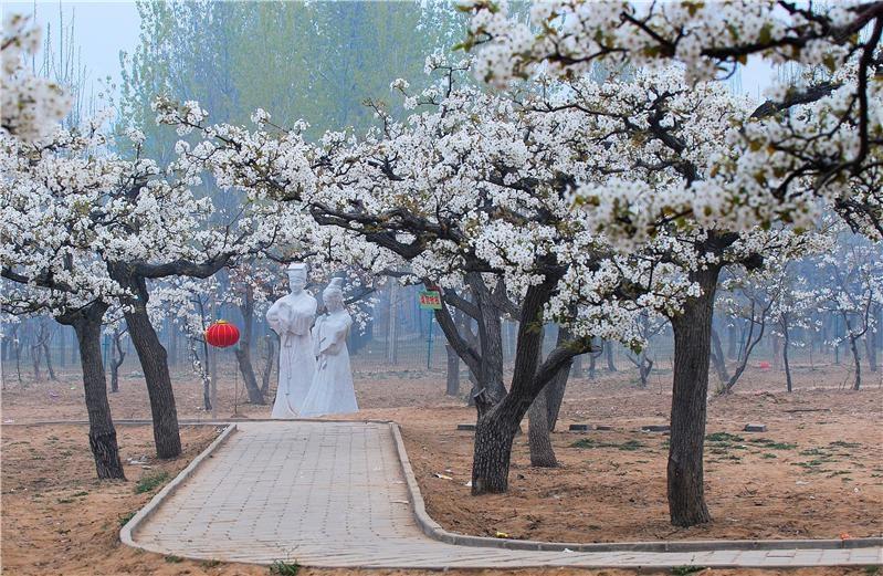 文化古迹 夏津黄河故道森林公园