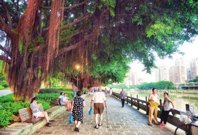 福州打造特色林荫道景观高清图片