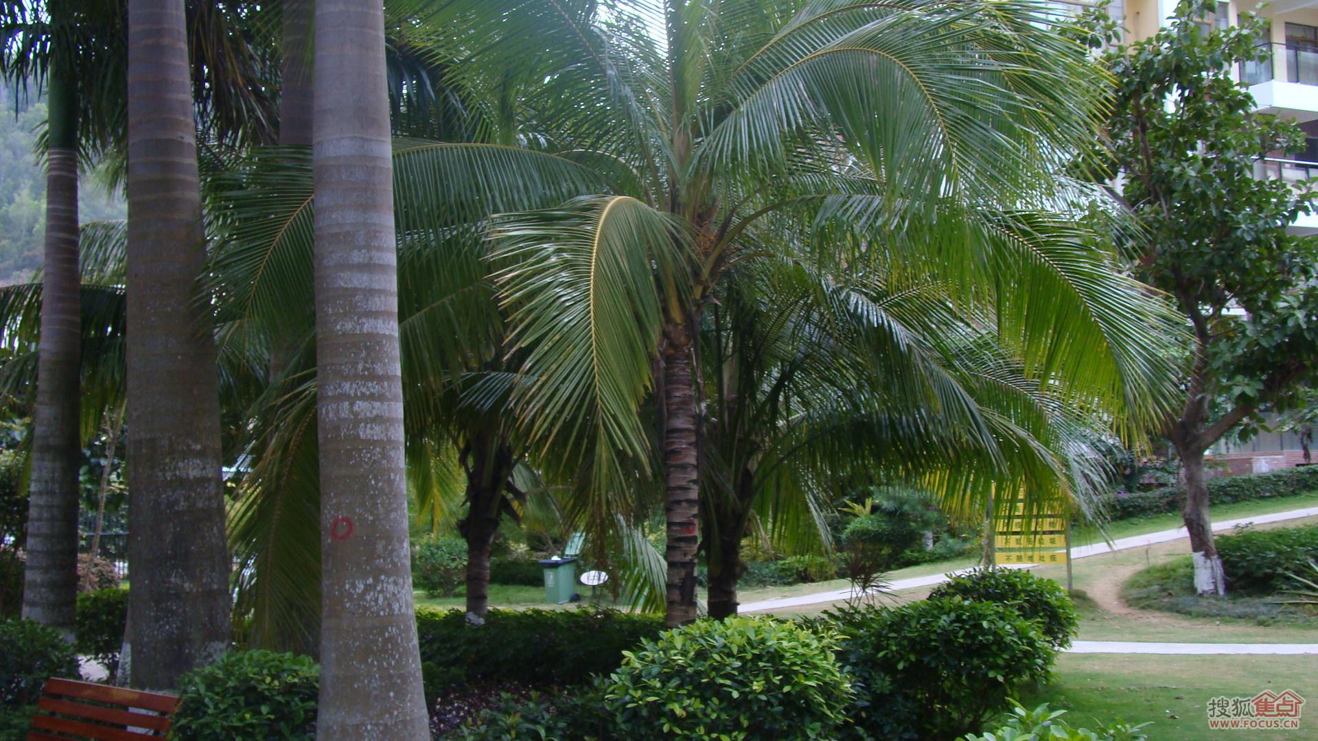 图:三亚椰岛阳光花园小区绿化照片2012年4月