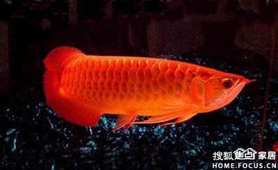 风水鱼图片