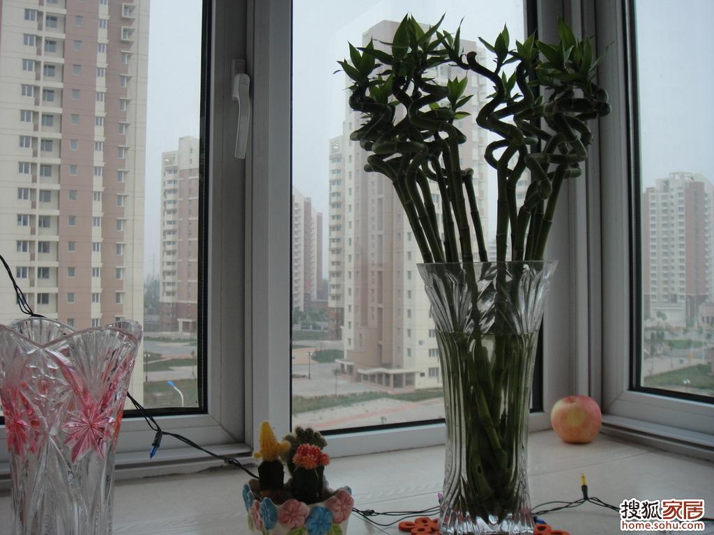 近看转运竹和小盆栽仙人掌,hoho~~~-图 我拍我家 温馨而幸福的小
