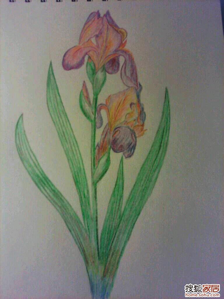 彩铅手绘花卉园