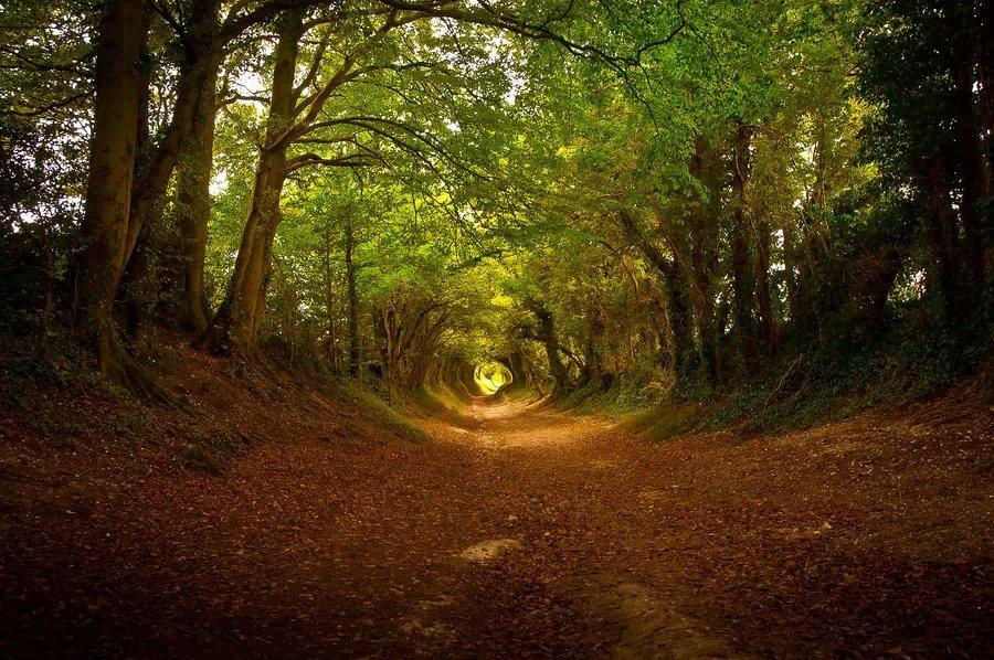 秋天树林小路图片