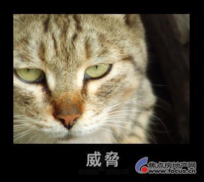 > 图:超级可爱的动物搞笑图片