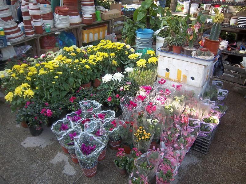 太原哪有花卉市場了?不是花鳥魚蟲市場就是花植物為主。家里養的花不是送人的花(圖2)