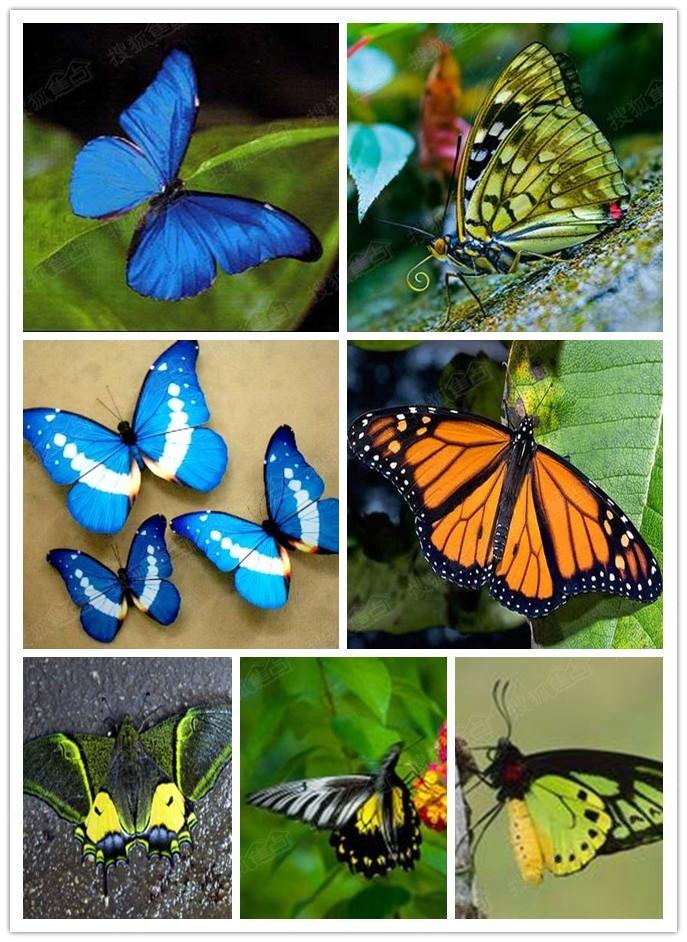 幼儿园绘画活动蝴蝶的一生