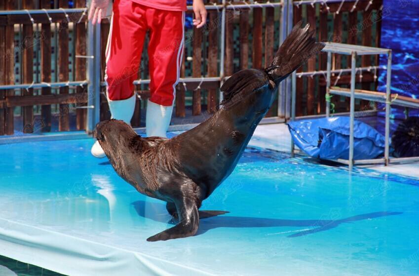 海狮海豹来度假 海洋欢乐节狂欢火爆继续