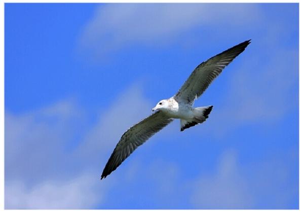壁纸 动物 鸟 鸟类 600_420