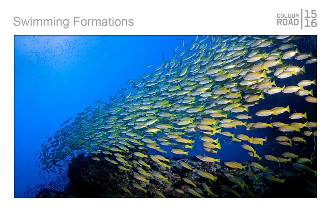 深海鱼群的游泳阵形