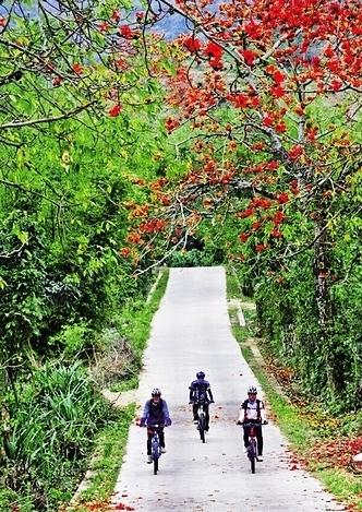 木棉花一路相伴骑行路-去中南 林海间 赏昌江木棉花图片