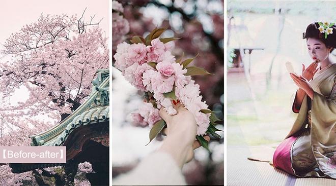 【潮流趋势】日本樱花 · 秒速五厘米