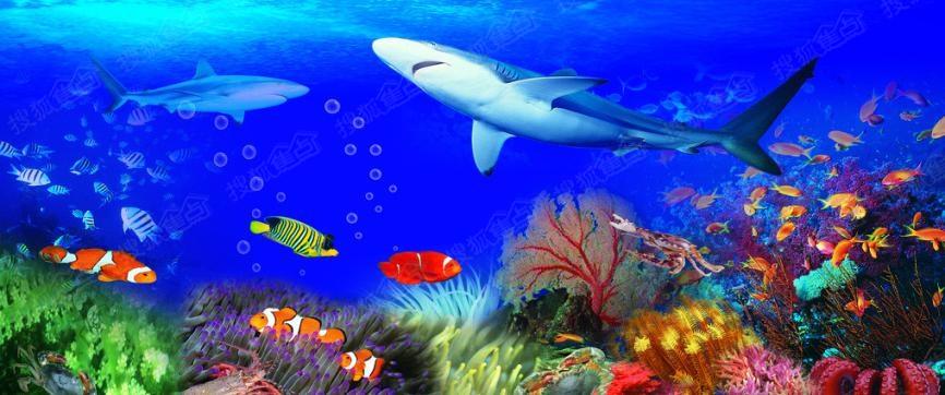 活动期间神秘鲨鱼霸气来袭,联袂多种珍稀海底动物军团,掀起