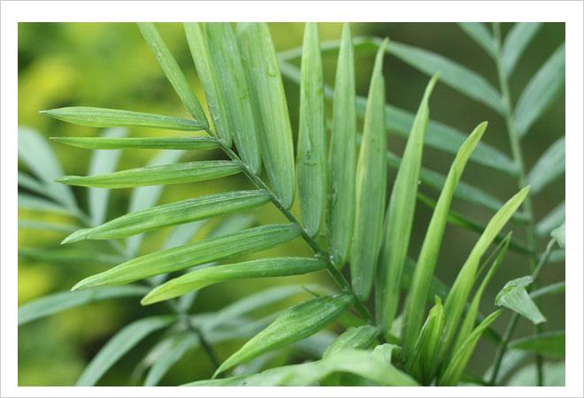 给秋天添绿 室内最好养的6种盆栽植物