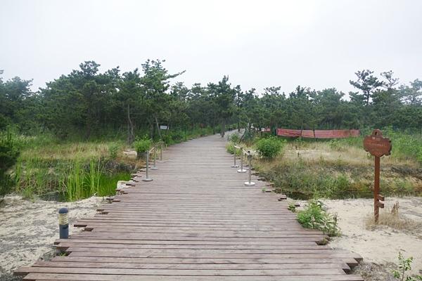 徒步穿越黑松林图片