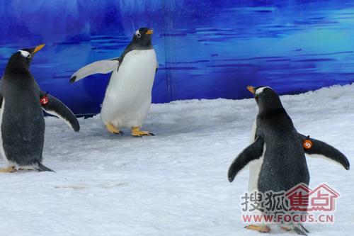 企鹅们互相嬉戏