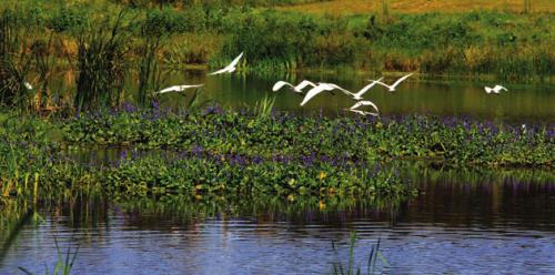 壁纸 动物 风景 鸟 摄影 桌面 500_248