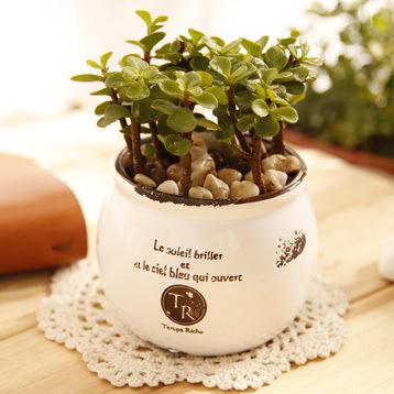 可爱小清新绿色盆栽