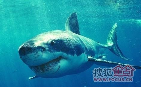 深海可爱动物图片