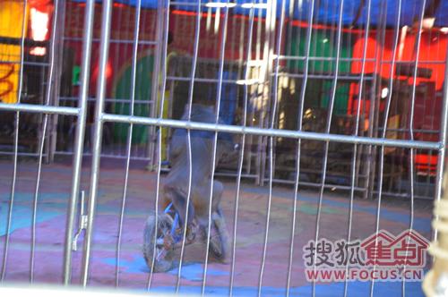 小猴骑自行车-和润新城邀请业主尚马戏度国庆活动盛大开启图片