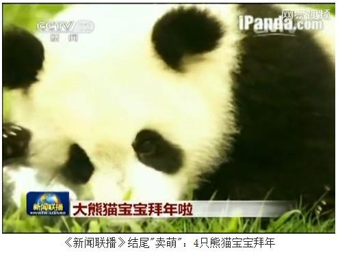 新闻联播 结尾 卖萌 4只熊猫宝宝拜年高清图片