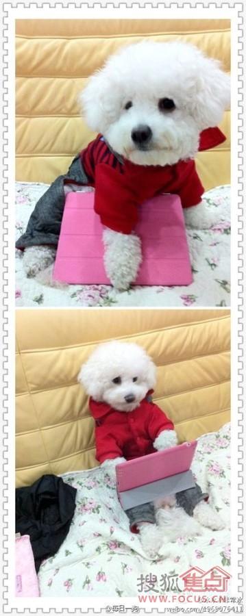 图:狗是世界上最可爱的动物