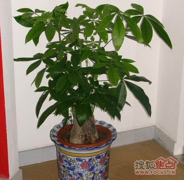 十大最适合室内摆放的植物图片