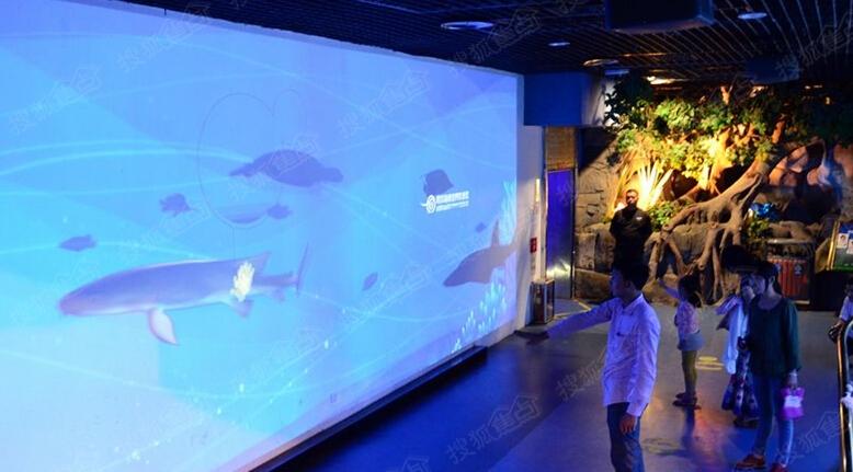 """青岛海底世界科普互动墙""""升级""""亮相 受游客好评"""