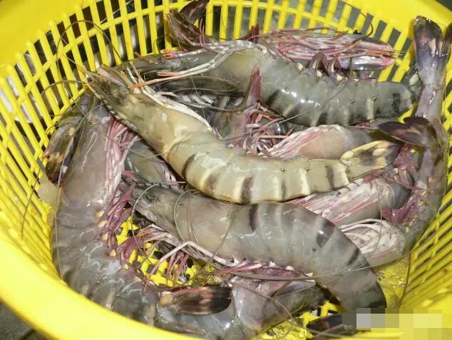青岛大虾的那些精彩段子---醉了!图片