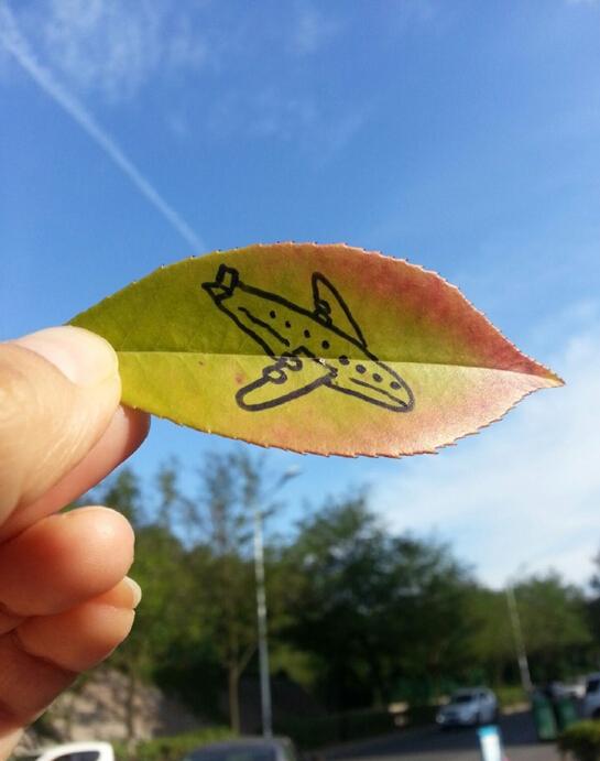 树叶上的飞机