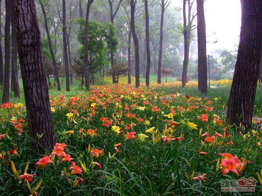 图:金海湾森林逸城公园2012年7月