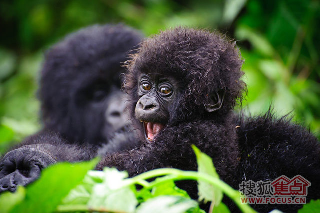 史上最可爱的动物宝宝强照来袭!