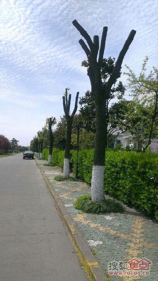 对照一下小区树木也是这