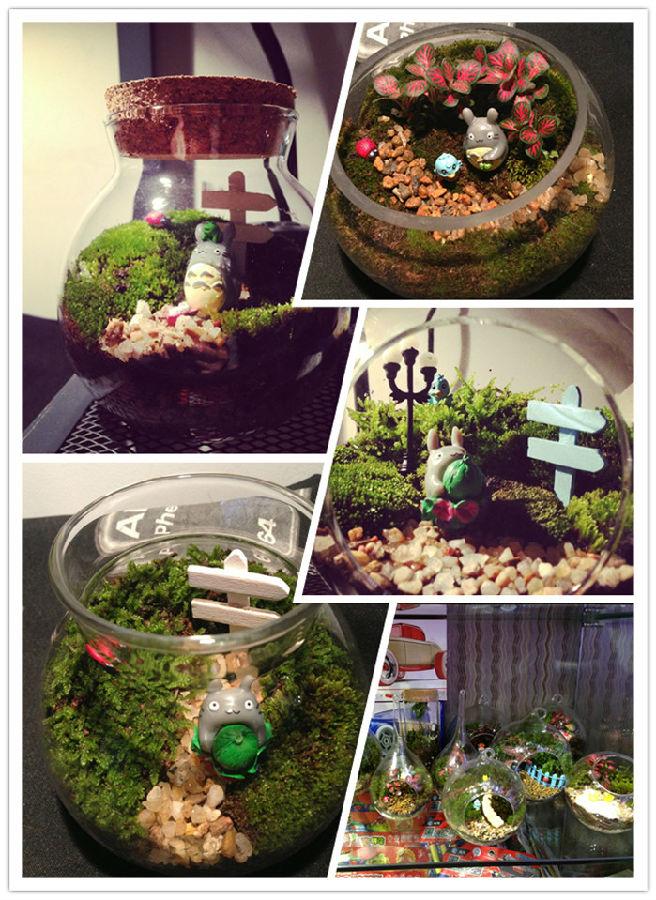 植物微景观diy图片