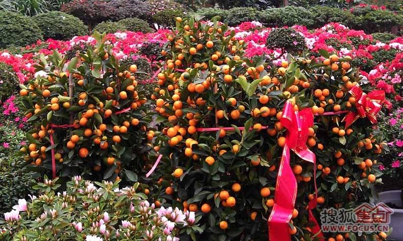 沈阳白塔堡花卉批发市场