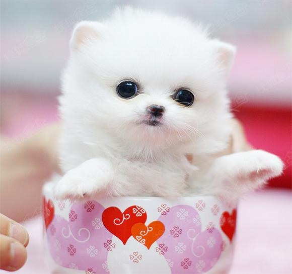 动物图片 可爱型