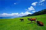 【摄影】赛里木湖:在天堂里放牧